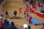PALIO 2013: caduta mortale del cavallo Mamuthones